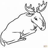 Moose Coloring Sitting Drawing Bull Printable Alaska Getdrawings Supercoloring Categories sketch template