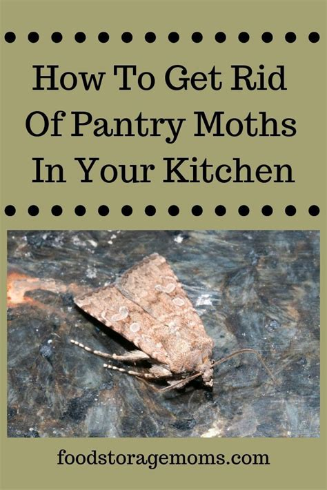 Moths In Kitchen Cupboards by You May Find These Small Pantry Moths On Walls In Your
