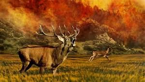 Herbstbilder Hintergrund HD