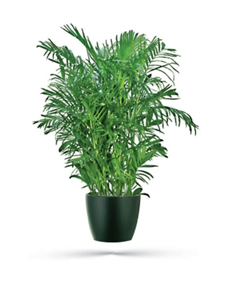 free home interior design catalog bamboo palm office plants