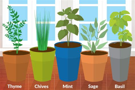 5 best herbs for an indoor kitchen herb garden