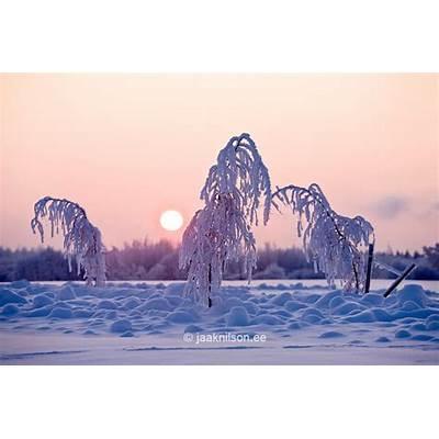 Winter Tartu County Estonia Europe