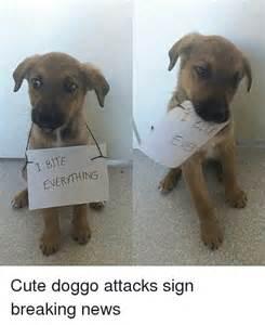 Doggo Cute Memes