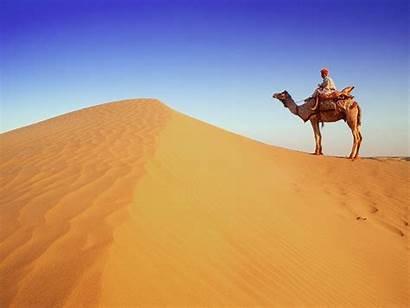 Desert Camel Rajasthan Wallpapers Animals