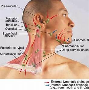 Physical Assessment  Heent  Ear  Nose  Throat  Neck