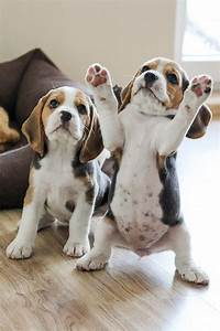 playful puppies luvbat