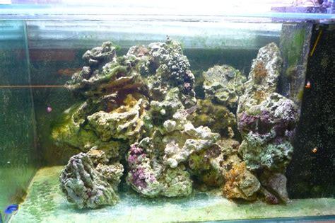 algues dans mon aquarium d eau de mer depuis 12 mois s