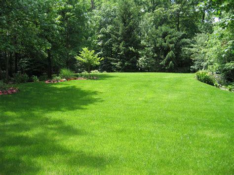 landscape lawn fall lawn care tips clc landscape design