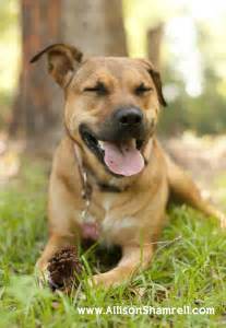 Mixed Breed Dogs List