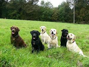 best family dog breed for me
