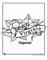 Coloring West Virginia Mountaineer Template Templates Sketch sketch template