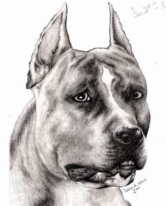 Brindle Pitbull - picture by denise_wells39 - DrawingNow