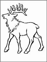 Coloring Elk Alce Colorear Mountain Rocky Animals Pintar Imprimir Sheet Colorir Printable Desenhos Animales Clipart Gritando Desenho Template Deer Bull sketch template