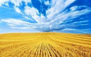 Wheat Field Sky Wallpaper HD 885 Wallpaper | WallpaperLepi