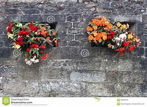 Mur De Fleurs : affichage de fleur sur un mur en pierre image stock image du normal rouge 59508549 ~ Farleysfitness.com Idées de Décoration