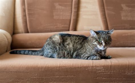 what is the best sofa fabric for pets ebay