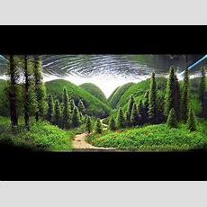 Top 10 Aquascape Design Youtube
