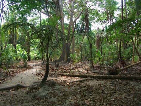 best forests in america parque nacional tayrona to south america