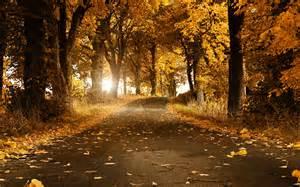 designer mã bel dã sseldorf beautiful autumn wallpaper 2560x1600