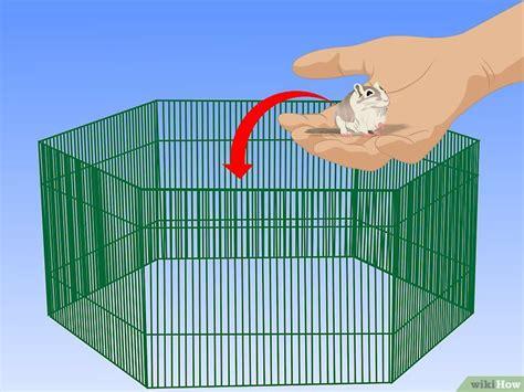 Gabbia Gerbillo - come pulire la gabbia tuo gerbillo 13 passaggi