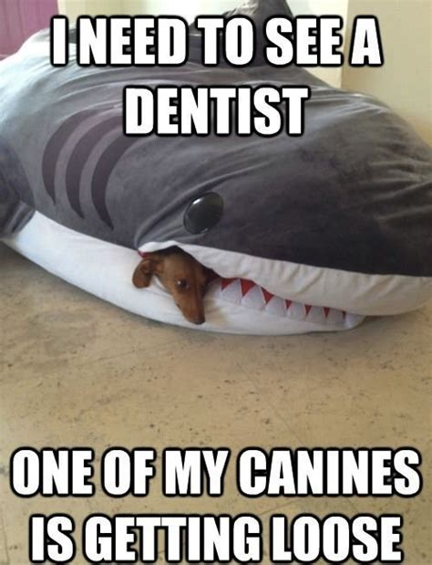 Funny Dental Memes - 12 cheesy dog puns to brighten your day
