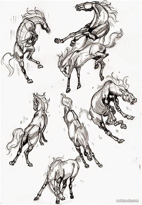 draw animals horses  preview