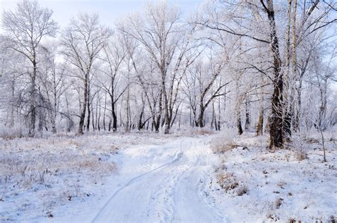 landscaping in winter winter landscape free stock photo public domain pictures
