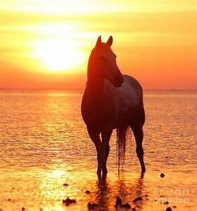 109 best Horses in sunset & sunrise images on Pinterest ...