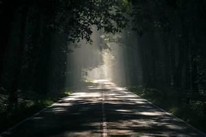 Nature, Asphalt, Dark, Forest, Environment, Path, Sunlight, Wallpapers, Hd, Desktop, And, Mobile