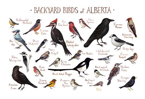 top 28 common birds of alberta winter birds feeding
