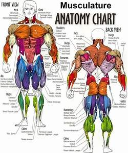 Muscle Anatomy Worksheet Tag Body Muscles Diagram Worksheet Human Anatomy Diagram