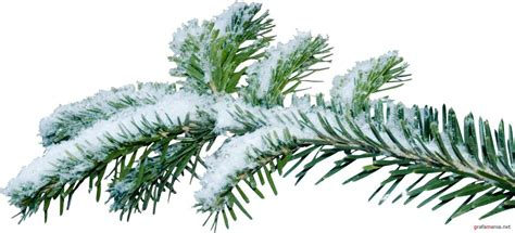 christmas tree branch png kanyagiftcenter com camo