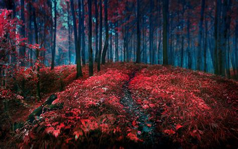 Forest, Red, Grass, Leaves, Trees, Landscape, Path