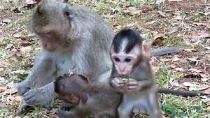 Cute baby monkey, Baby monkeys playing, The Real Life Of ...