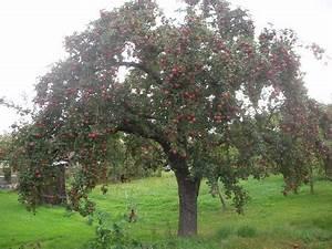 Apfelbaum Schneiden Sommer : streuobstwiesen landschaftspflegeverband mittelfranken ~ Lizthompson.info Haus und Dekorationen