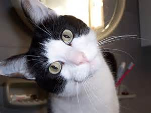 sty cat pictures curious felix your story funniest cat picture
