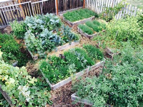 Fall Garden Update Using Cover Crops And Straw Mulch