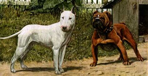 pitbulls info  games dangerous  scary animals