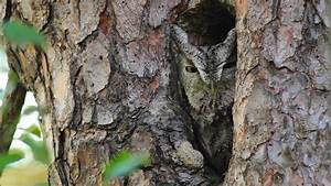 In Search Of Hidden Owl  40 Excellent Examples Of Owl
