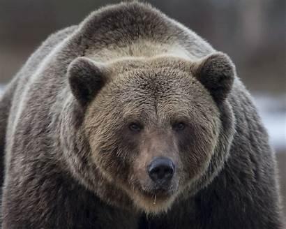 Bear Brown Photoshoot Latest