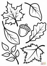 Acorn Coloring Creative Printable Fall Davemelillo sketch template