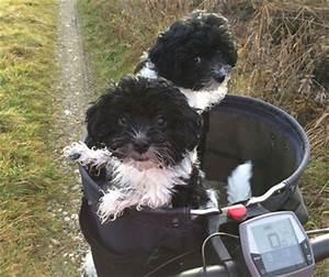 Fahrradkorb Hund Hinten : fahrradkorb f r hunde g nstig online kaufen hunde ~ Kayakingforconservation.com Haus und Dekorationen