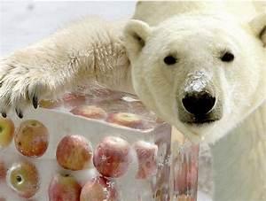 Cute panda eats a treat-funny baby polar bear and panda ...