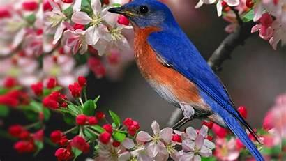 Bird Desktop Birds Backgrounds Spring Winter Wallpapers