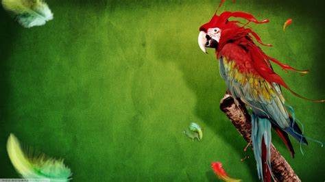 abstract animals birds macaws feathers green