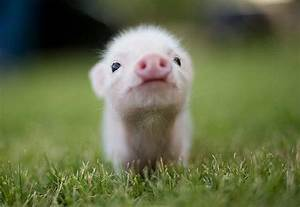 Unbelievably cu... Cute Animals