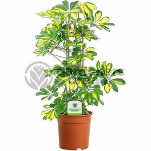 indoor potted plants gardenersdream indoor plant mix 3 ...