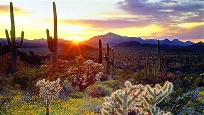 Desert Sunset Vegetation Sundown Wallpapers Nature Sun