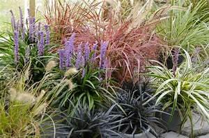 Winterharte Pflanzen Liste : die besten 17 ideen zu winterharte gr ser auf pinterest d rreresistente pflanzen roundup ~ Eleganceandgraceweddings.com Haus und Dekorationen