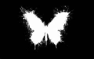 Butterfly Black Vector Design HD Wallpapers   HD Wallpapers
